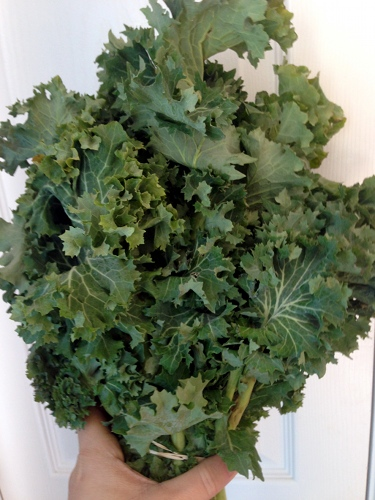 Siberian Kale from our local farmers' market has a slightly bitter flavor and a nice crunchy texture.