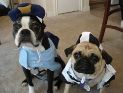 Dogs Dressed for Halloween