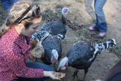 Turkeys love to eat right out of your hands.