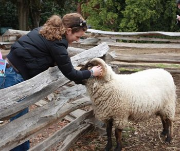 Petting a sheep at Mt. Vernon farm.