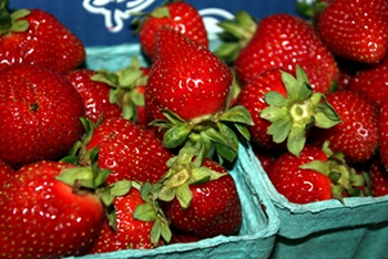 Gorgeous, local, organic strawberries picked fresh during strawberry season, May.