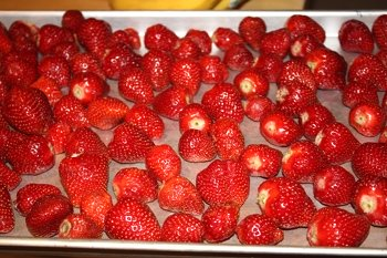 Flash freezing strawberries on a cookie sheet to save for winter preserves their health benefits and flavor.